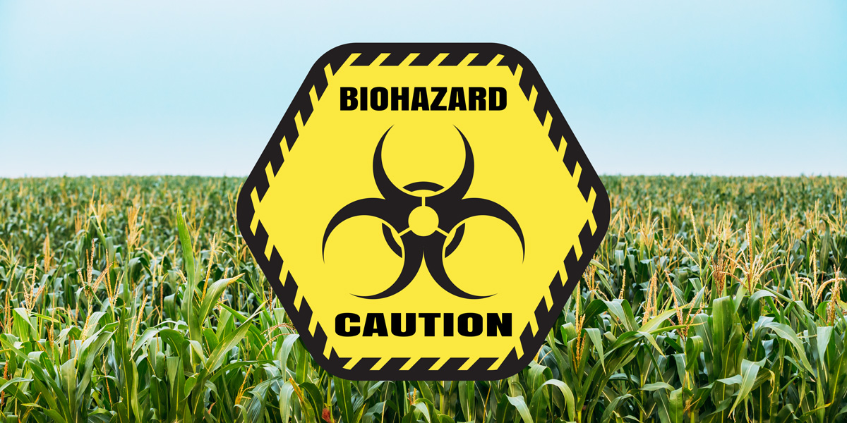 GM insecticidal maize a biohazard