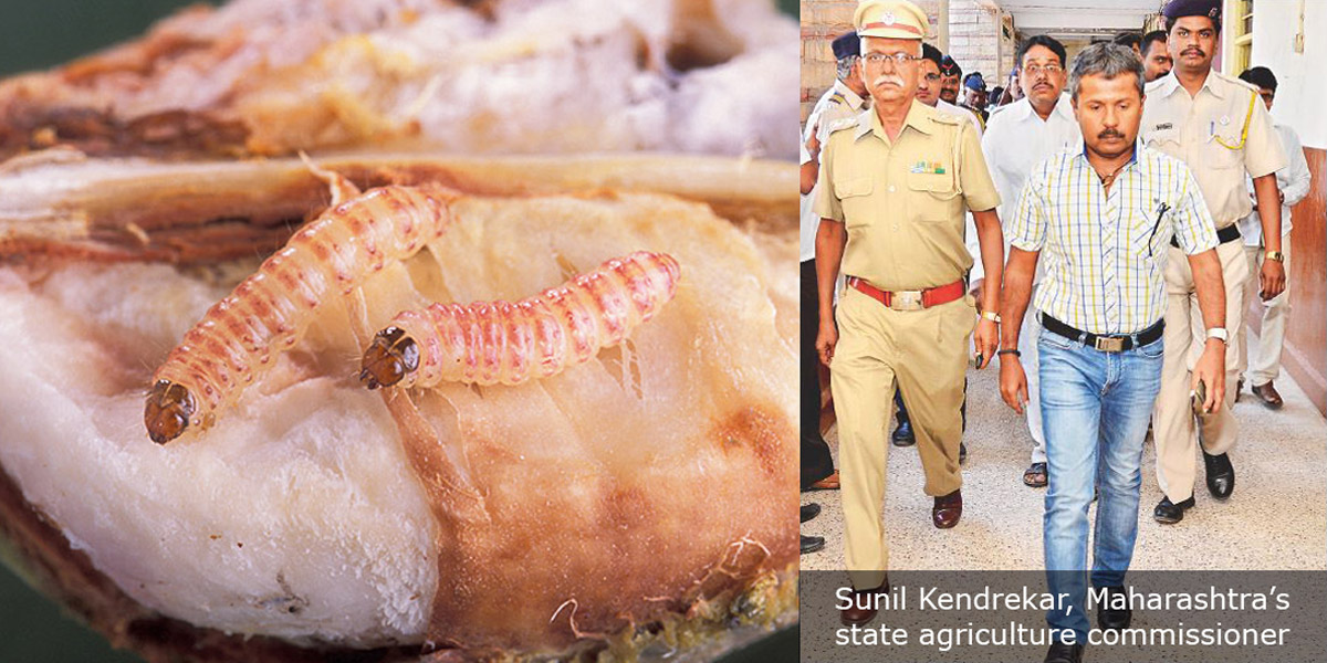 Sunil Kendrekar and Pink Bollworm