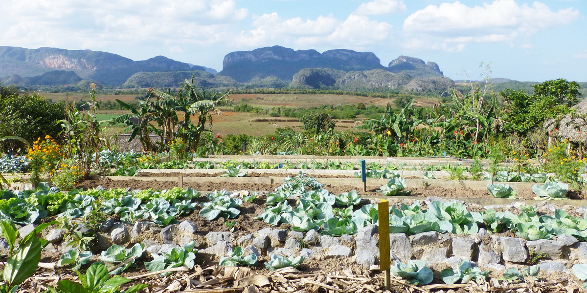 Vallee de Vinales-Finca - agroecology project