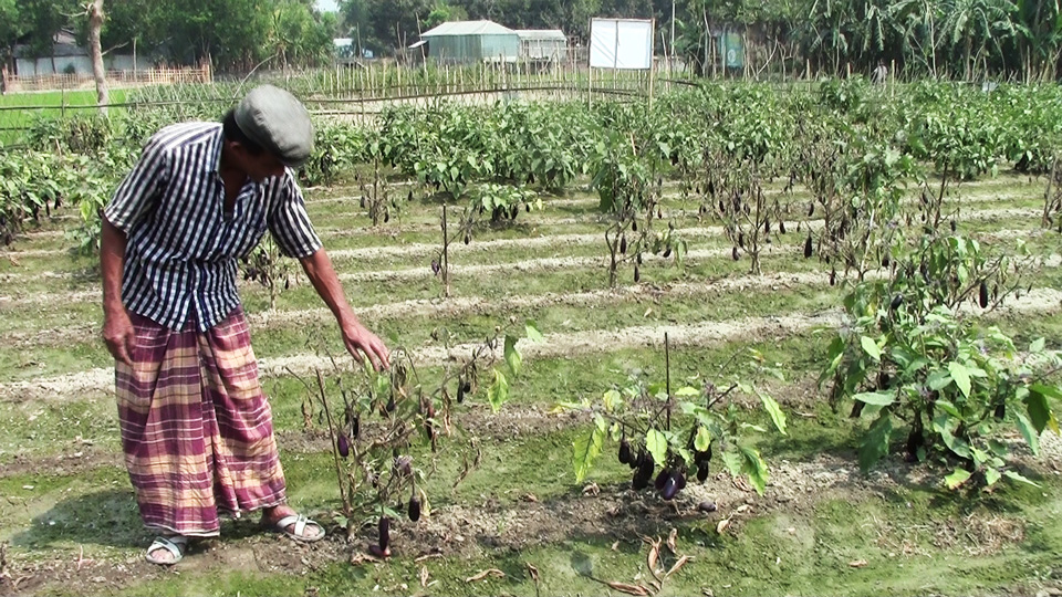 Propaganda over facts? BBC Panorama and Bt brinjal Insecticide For Plants