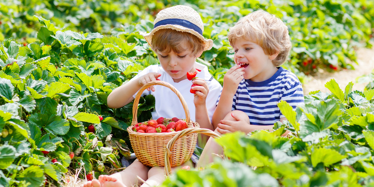 children eating strawberries