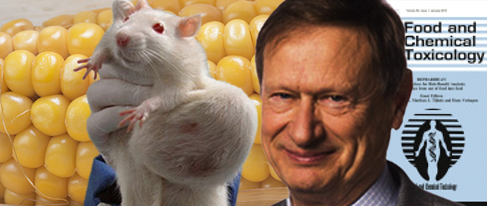 cancer in rats gm food debate