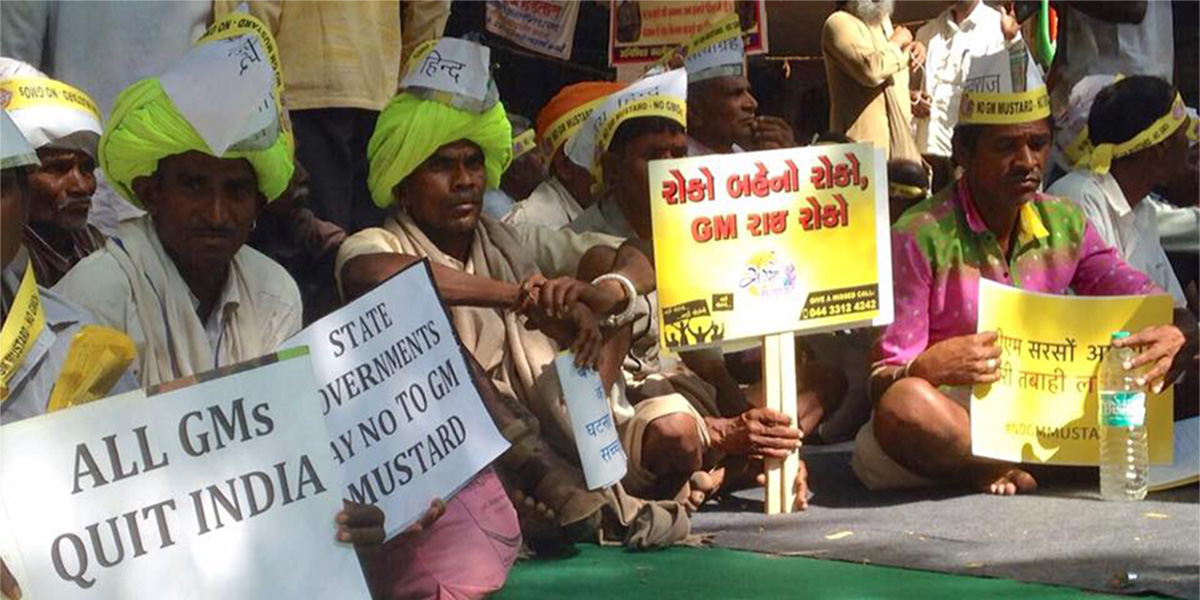 say no to GMO Mustard - farmer protest