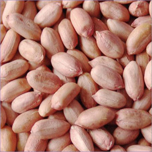 Groundnut