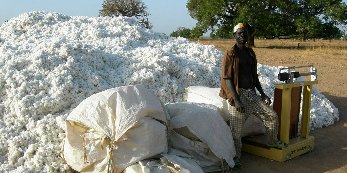 Burkina Faso cotton harvest in Dourtenga