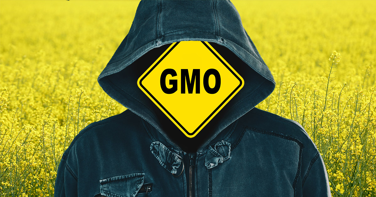 Canola field hooded, figure and GMO sign