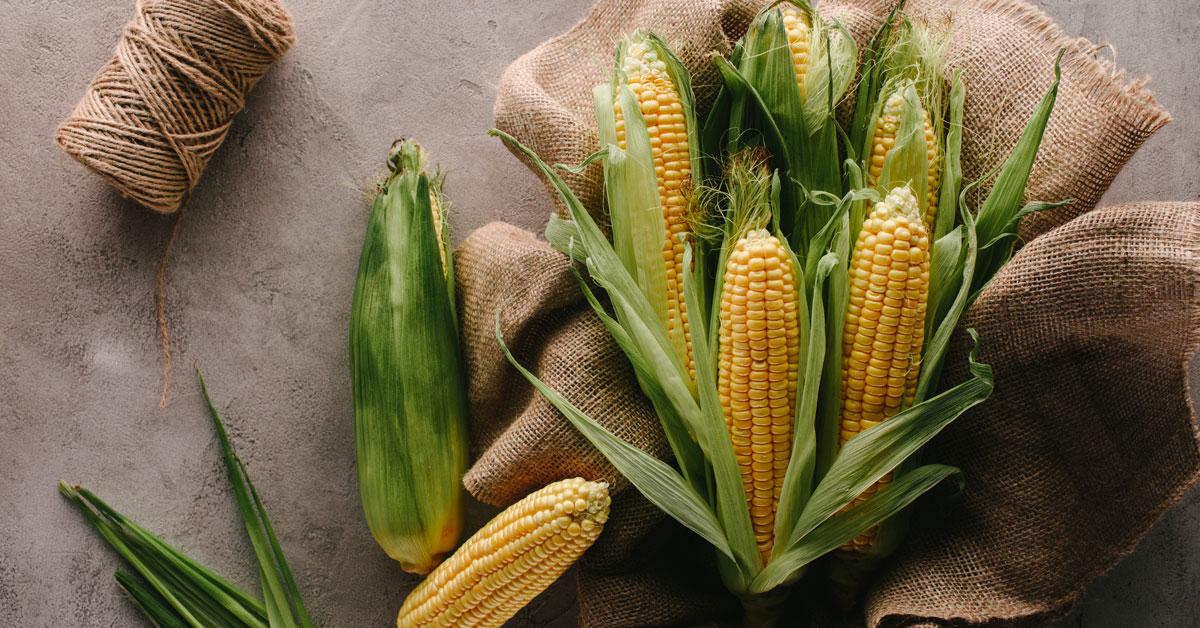 Corn cobs on sack cloth