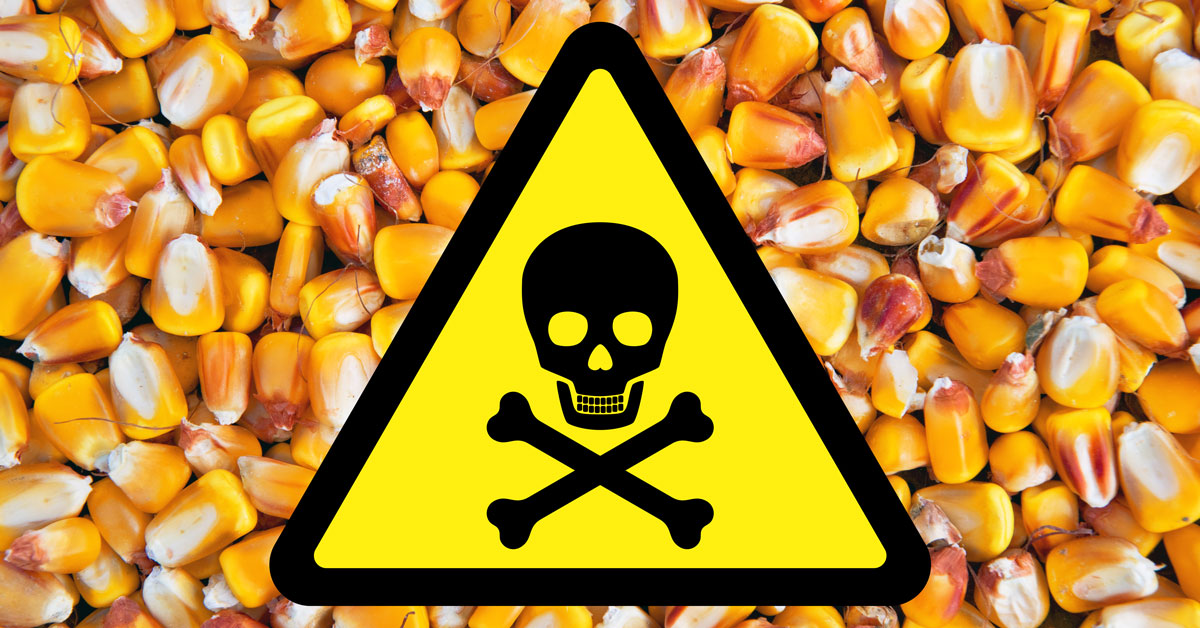 Corn seeds and toxic sign