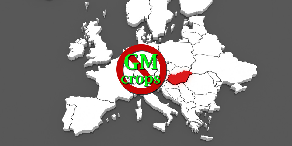 Hungary could ban cultivation of GM Crops