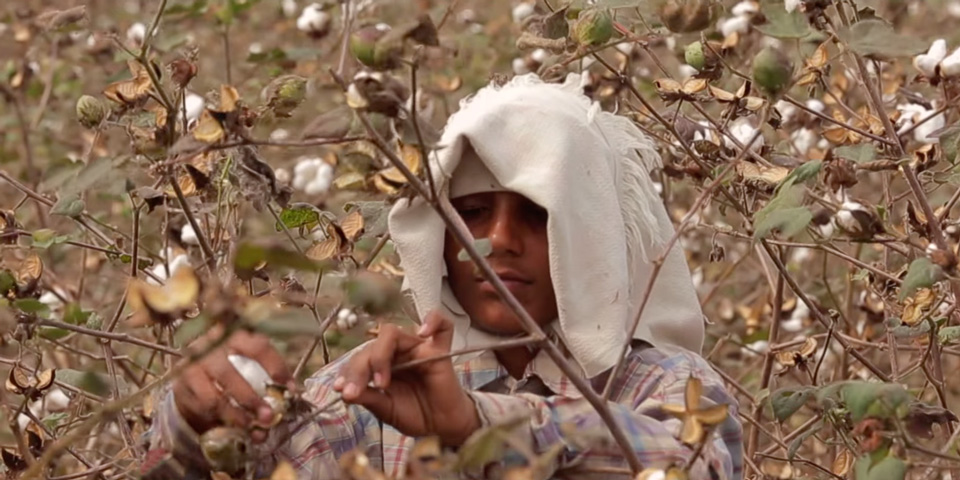Indian cotton picker