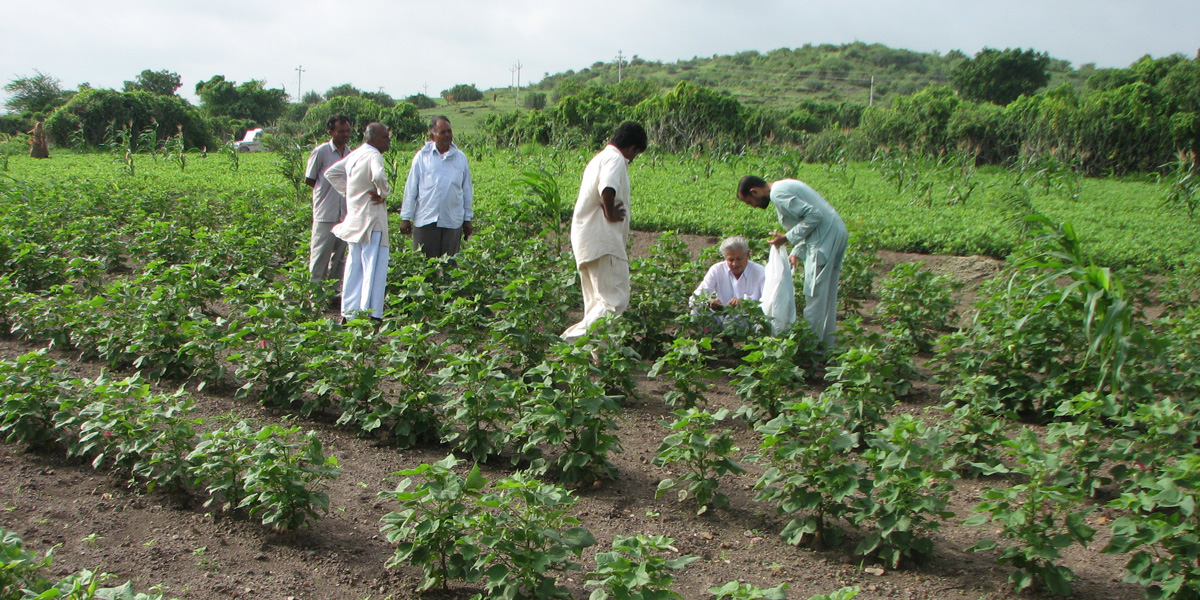 Indian cotton farmers collecting insects