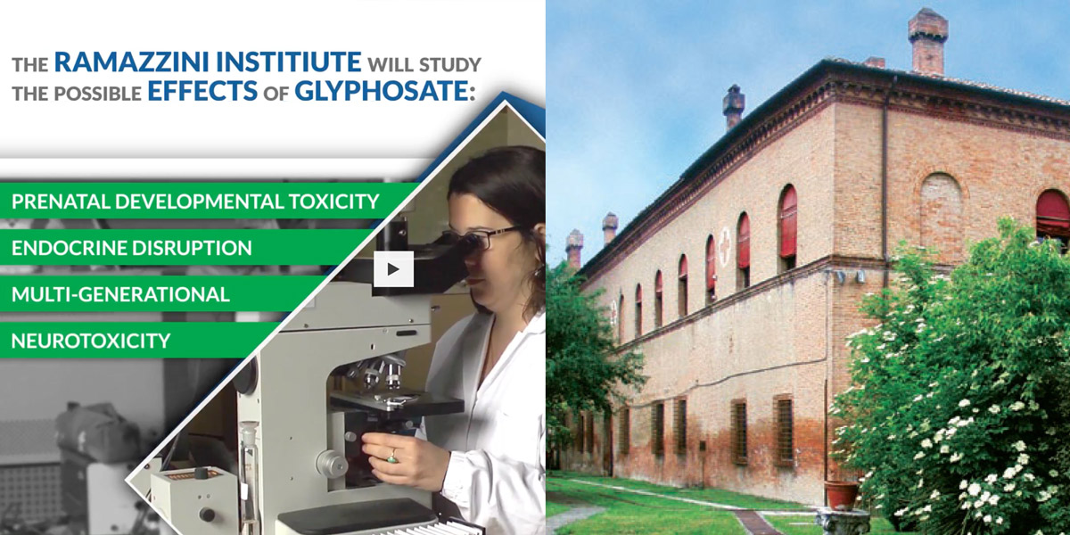 Ramazzini institute research Glyphosate