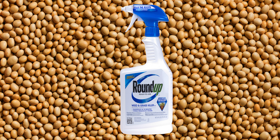 Roundup sprayer and GM Roundup Ready soya beans