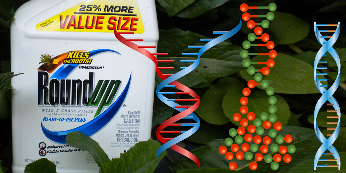 Roundup bottle and DNA Damage