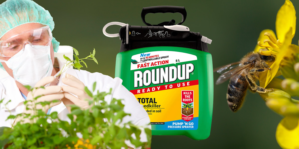 Scientist, Roundup, Bee