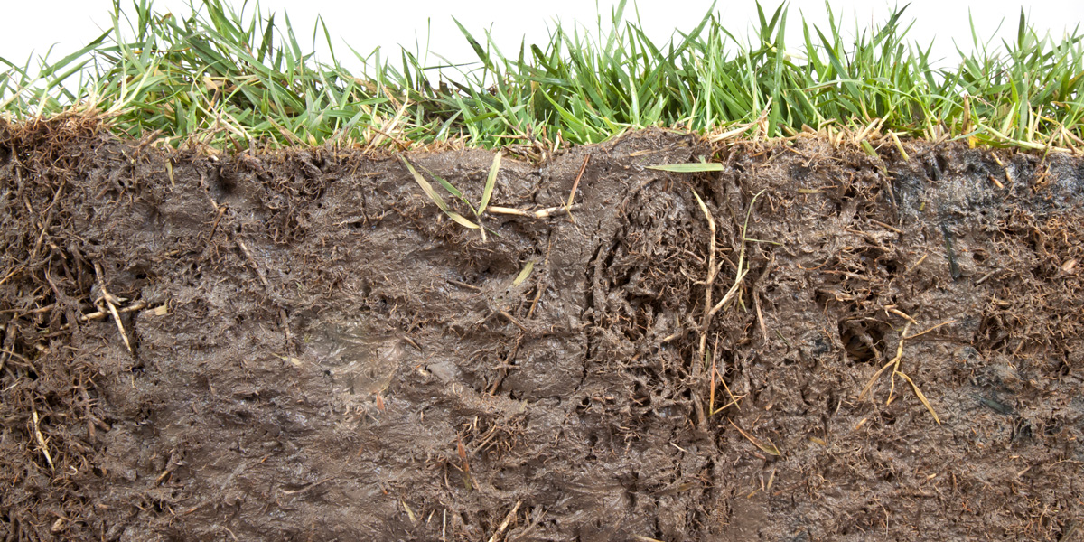 Section of grass and soil