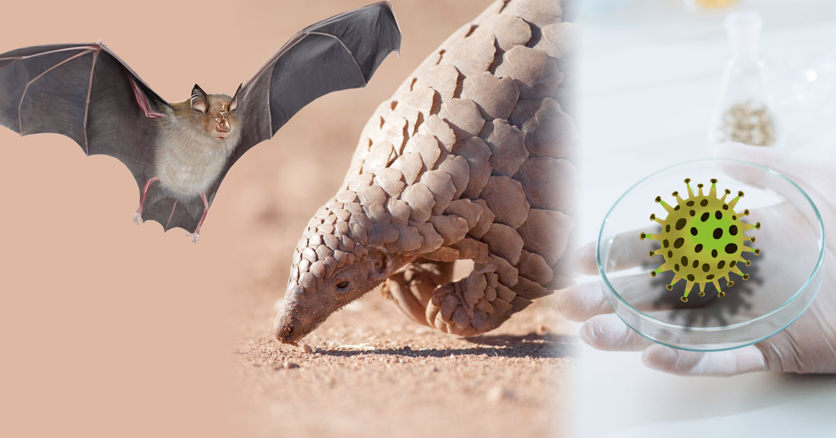 bat, pangolin and petri dish